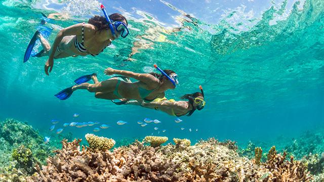 世界遺産の珊瑚礁が広がるニューカレドニアの海は、豊かな栄養源に恵まれ1... フィジー、タヒチ、